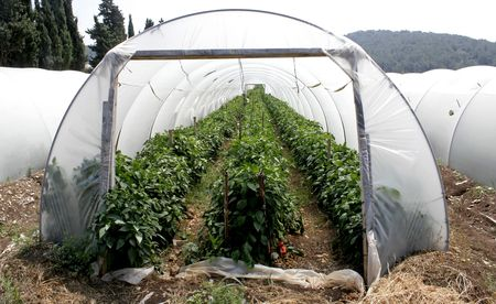 tunnel shaped plastic greenhouse Stock Photo