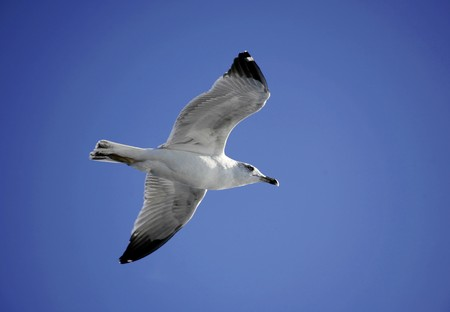 Seagull soaring in the blue sky above photo