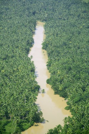 Aerial view of muddy river and coconut groves in south india