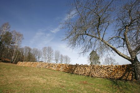 Long line of wood logs piled up in field next to tree photo