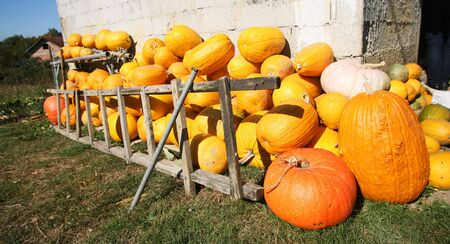 Variety of pumpkins stored in farmyard front photo