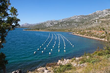 floaters: Lines on white floaters on mussel farm in Croatia.