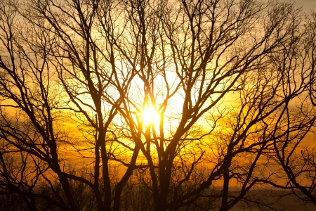 Sunsetting through trees creating silhouette on orange background