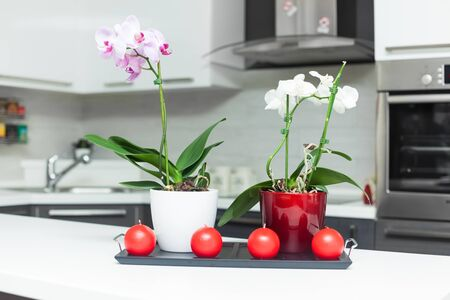 Purple and white orchids in modern kitchen Stock Photo - 17259897