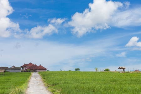 paddy fields: Country road in the middle of paddy fields on the island of Bali, Indonesia. Stock Photo