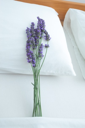 Fresh lavender on bed pillow in bedroom interior photo