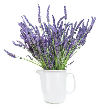 lavender Standard-Bild