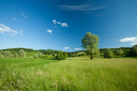 Beautiful lush landscape with green grass and trees with rolling hills and fluffy clouds in blue sky photo