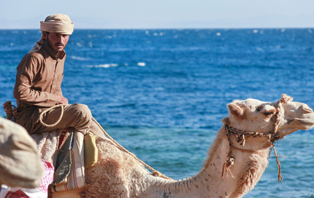 DAHAB, EGYPT - JANUARY 30, 2011: Bedouin man rides a camel on\ beach during safari. Local bedouins rely on tourism to make a\ living in the harsh desert.\