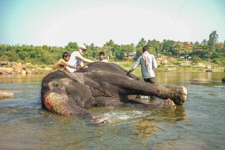 karnataka culture: HAMPI, INDIA - 28 JANUARY 2015: Morning ritual of bathing Lakshmi the temple elephant of Virupaksha Temple with trainer and tourists