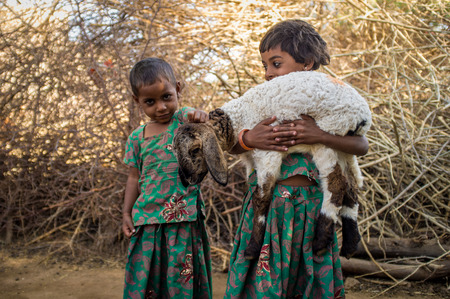 gujarat: GODWAR REGION, INDIA - 13 FEBRUARY 2015: Two little Rabari girls in stable with small lamb. Rabari or Rewari are an Indian community in the state of Gujarat. Editorial