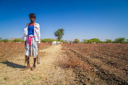 young farmer: GODWAR REGION, INDIA - 14 FEBRUARY 2015: Young shepherd from Rabari tribe with no turban stands in field with cattle. Rabari are an Indian community in the state of Gujarat. Editorial