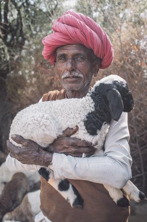gujarat: GODWAR REGION, INDIA - 13 FEBRUARY 2015: Elderly Rabari tribesman holds lamb in outdoor stable. Rabari or Rewari are an Indian community in the state of Gujarat.