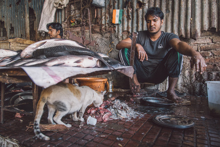 fish vendor: MUMBAI, INDIA - 11 JANUARY 2015: Cat eats fish leftovers while vendor looks and waits for customers. Post-processed with grain, texture and colour effect.