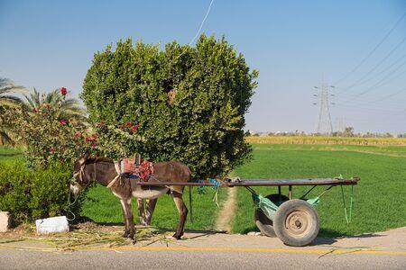 alongside: Empty donkey cart alongside road in Valley of Kings, Egypt. Stock Photo