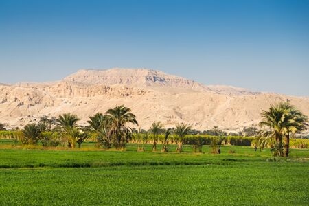 hill of the king: Oasis in the Valley of the Kings, Egypt.