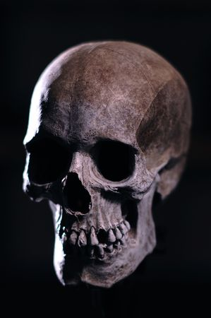 scary skull: A Portrait of a Model of a Human Skull