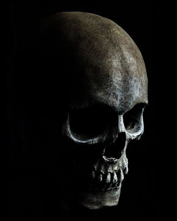 Model of a human skull with a black background photo