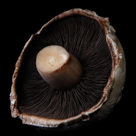 The underside of a mushroom show the gills on a black background. photo