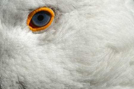 A Close up of a head of a Goose Stock Photo