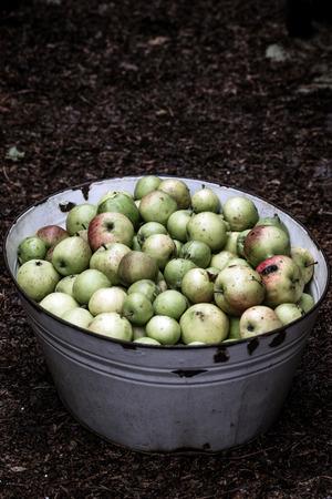 Tin Bath of Apples
