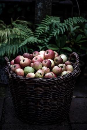 Basket of Apples Stock Photo