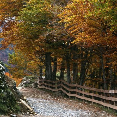 road with fence and trees autumnal photo