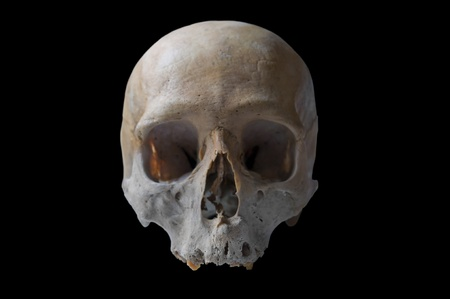 authentic human skull in front view isolated in black background Stock Photo - 9056559