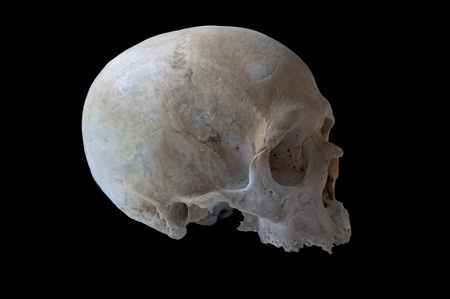 authentic human skull in right view isolated in black background photo