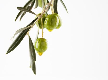 olivo arbol: rama de olivo con aceitunas y aceite de aislados en fondo blanco con copyspace