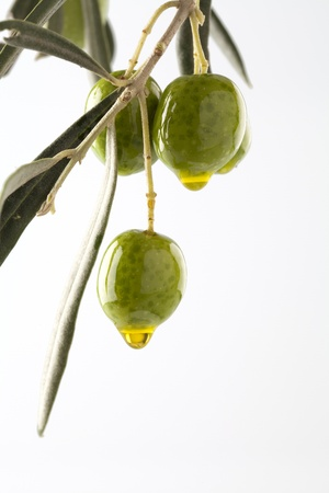 olive branch with olives and oil isolated on white background with copyspace photo