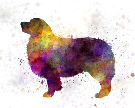 australian shepherd: Australian Shepherd in watercolor