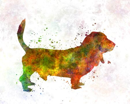 hush hush: Basset Hound in watercolor