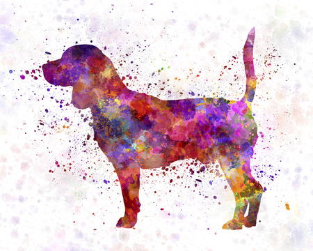 beagle: Beagle in watercolor