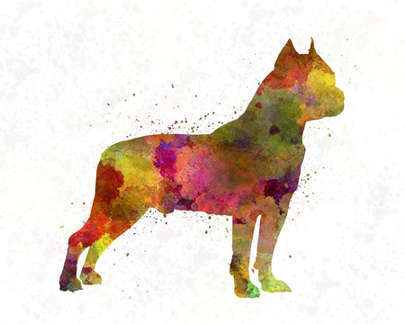 american staffordshire terrier: American Staffordshire Terrier in watercolor