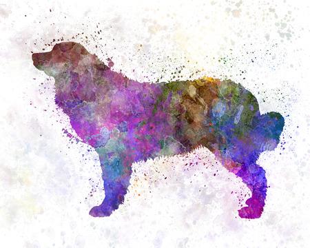 Bernese mountain dog in watercolor Standard-Bild