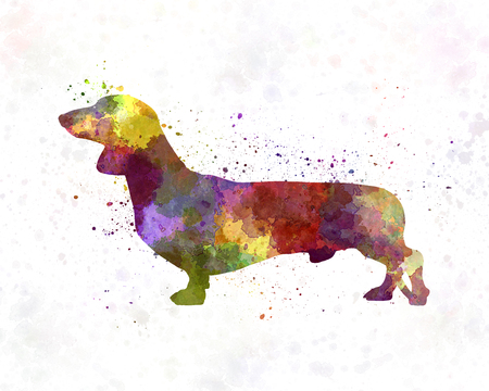 badger dog: Dachshund in watercolor Stock Photo
