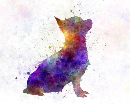 chihuahua dog: Chihuahua 01 in watercolor Stock Photo