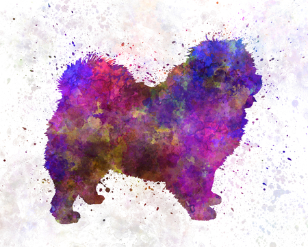 01: Chow-chow 01 in Watercolor