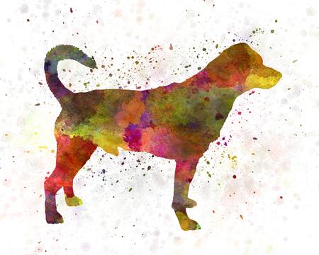 01: Danish swedish farmdog 01 in watercolor