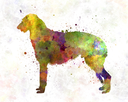 01: Deerhound 01 in watercolor
