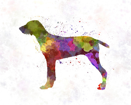 slovakian: Wirehaired Slovakian Pointer in watercolor