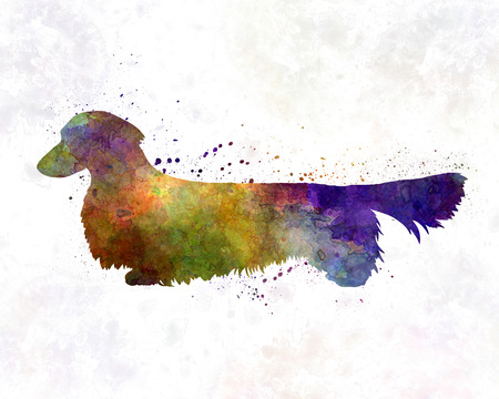 long haired: Dachshund Long Haired in watercolor