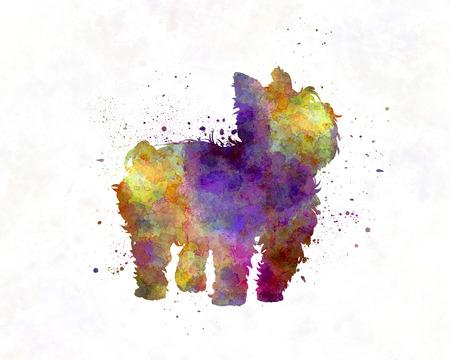 yorkshire terrier: Yorkshire Terrier in watercolor