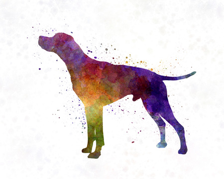 pointer: English Pointer in watercolor