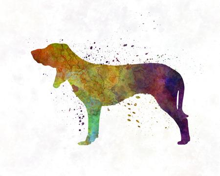 chien: Swiss Hound in watercolor