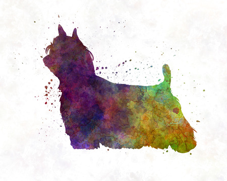 yorkshire terrier: Yorkshire Terrier Long Hair in watercolor Stock Photo