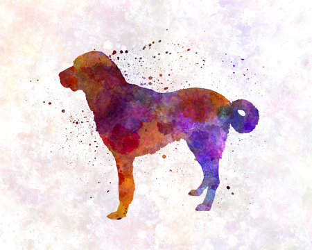 kangal: Anatolian Shepherd Dog in watercolor