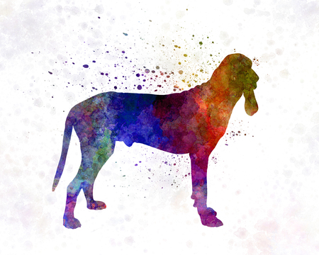 hound: Ariege Hound in watercolor