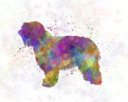 sheepdog: Catalonian Sheepdog in watercolor Stock Photo
